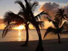 bahama, palm, soleil