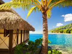 palm, море, пляж