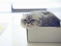 кошек, how, кошки