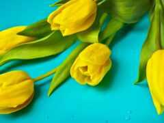 цветы, тюльпан, хороший