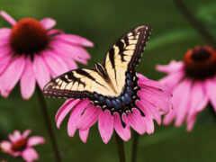 бабочка, animal, euch
