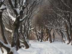 winter, качестве, хорошем