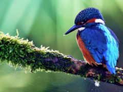 птица, птичка, тропическая
