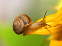 улитки, snail, насекомое