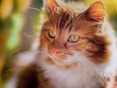 cats, кот, кошки