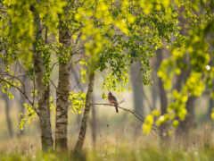 branch, дерево, природа
