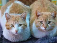 кот, мужской, женский
