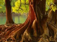 дерево, чудеса, oir
