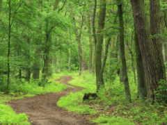 яndex, лес, леса