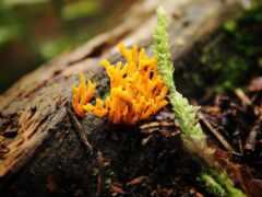 лишай, fungus, ноутбук