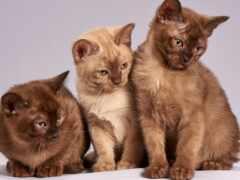 кошка, кот, nacmuzei