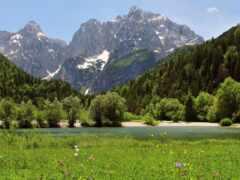 цветы, гора, луг