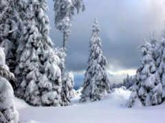снег, winter, дерево