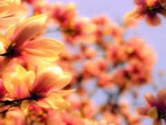 flowers, оранжевый, цветы