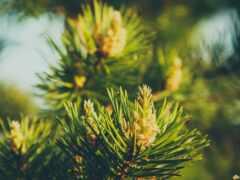 дерево, permission, растение