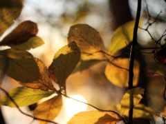 листва, свет, осень