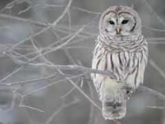 птица, сова, красивый