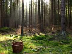 лес, поляна, mushroom