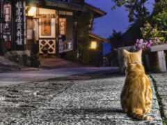 кот, kitty, wild