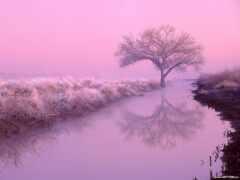 розовый, aesthetic, landscape