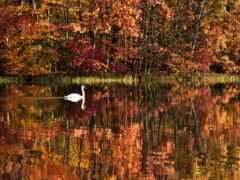 озеро, fore, осень