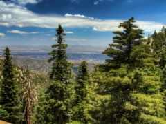 природа, горы, ели