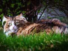 кошки, zoom, images