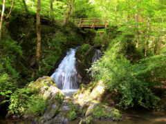 природа, музыка, отдыха
