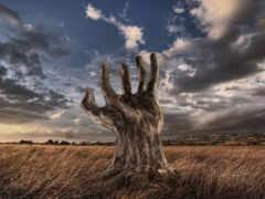 рука, дерево, дерева