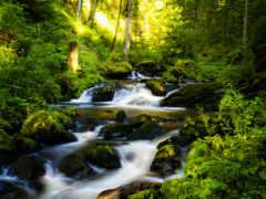 водопад, природа, лес Фон № 152268 разрешение 1600x900