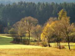 лес, trees, осень Фон № 162844 разрешение 3000x2133