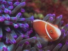 дневник, fish