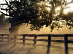 sfondi, tramonti, youtube