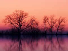 озеро, розовый, фея
