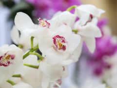 орхидея, цветы, white