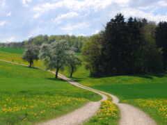 природа, landscape, дерево