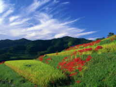 небо, blue, amazon
