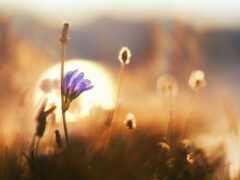 род, цветы, вечер