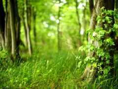 лес, природа, clean