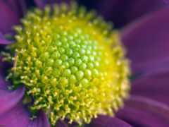 цветы, близко, красивый