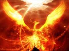 phoenix, крыло, книга