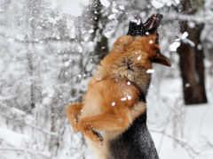 собака, winter, снег