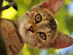 кот, дерево, animal