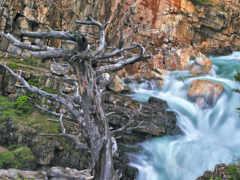 река, дерево, resim