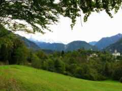 paisaje, bosque, naturale