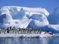 iceberg, айсберги, пингвины