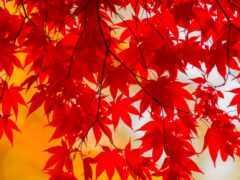 осень, fast, hooray
