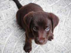 animal, foster, собака