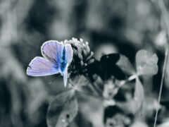 papillon, насекомое, white