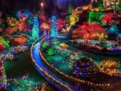 garden, christmas, идея